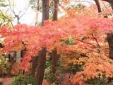 Shokoso Garden