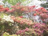 花の木公園