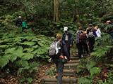 Kamakura Gion-yama Hiking