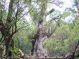 Jomonsugi Trekking