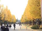 靖国神社のイチョウ