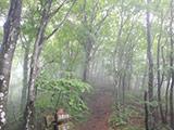 Mt. Mito Trekking