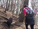 Trekking at Hirugatake